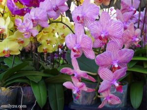 1 Pesta Orkid Ipoh