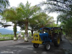 1 Trong Leisure Farm Perak