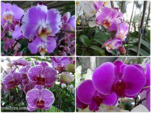 10 Pesta Orkid Ipoh