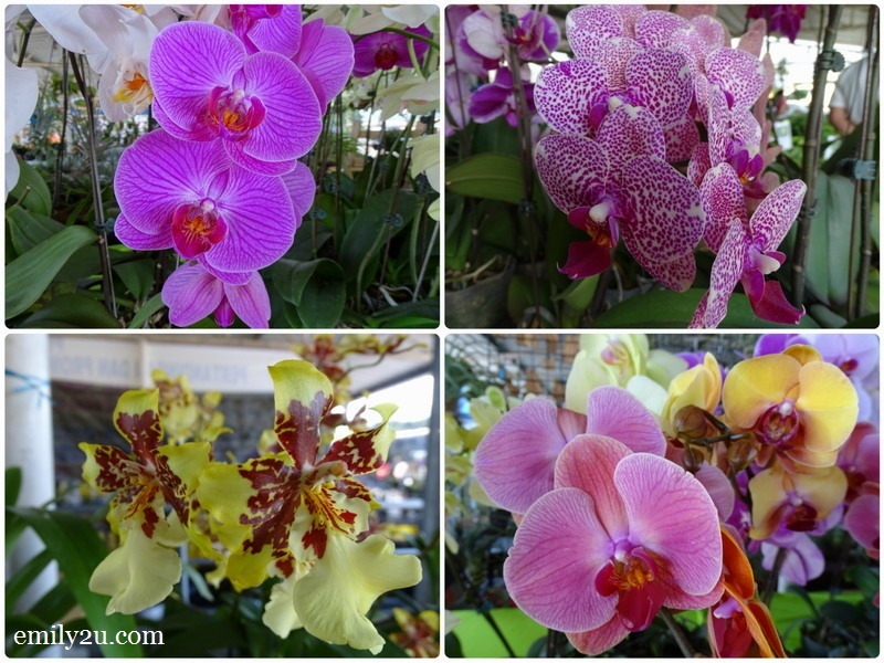 different species of orchids