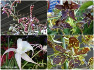 12 Pesta Orkid Ipoh