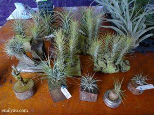 13 Pesta Orkid Ipoh
