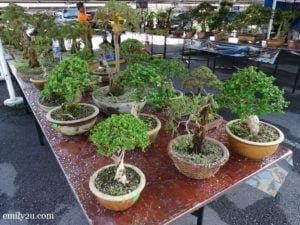14 Pesta Orkid Ipoh