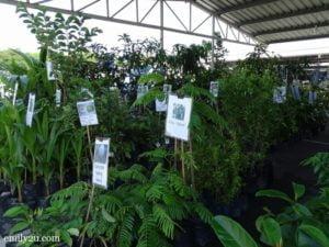 15 Pesta Orkid Ipoh