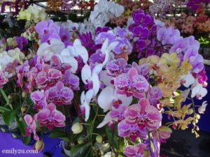 2 Pesta Orkid Ipoh