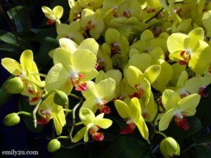 3 Pesta Orkid Ipoh