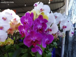 4 Pesta Orkid Ipoh