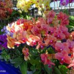 Orchid Fest - Competition & Promotion In Conjunction With Hari Raya Aidilfitri