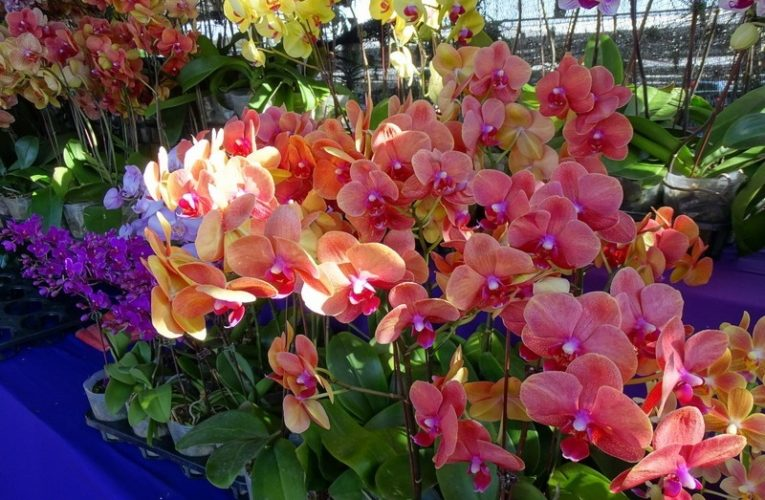 Orchid Fest – Competition & Promotion In Conjunction With Hari Raya Aidilfitri
