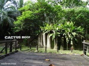 6 Cactus Rock