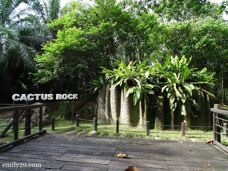 6. Cactus Rock