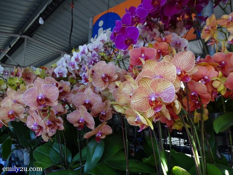 an abundance of orchid blooms