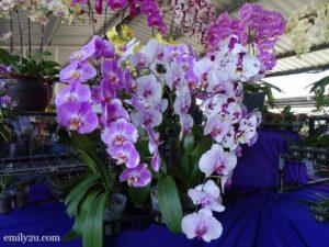 7 Pesta Orkid Ipoh