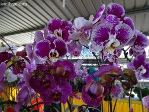 9 Pesta Orkid Ipoh