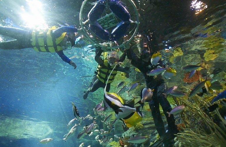 Making Memories with Ocean Park Summer Splash