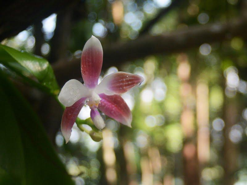 5. Orchid Garden