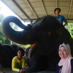 7 Kenyir Elephant Village