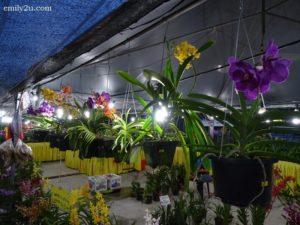 1 Pesta Orkid dan Flora