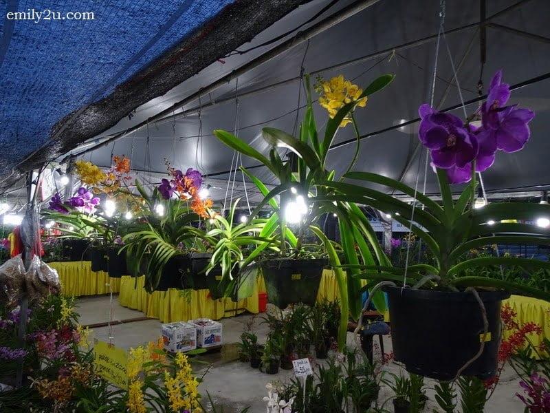 1. Pesta Orkid & Flora