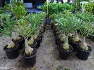 10 Pesta Orkid dan Flora