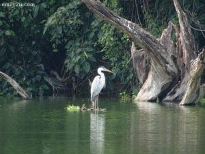 10 Taman Alam Kinta