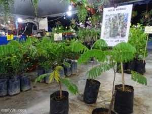 11 Pesta Orkid dan Flora