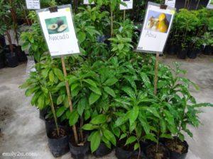 13 Pesta Orkid dan Flora