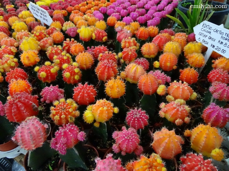 15. colourful cacti
