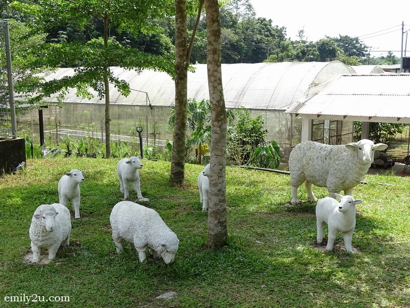 19. artificial family of sheep