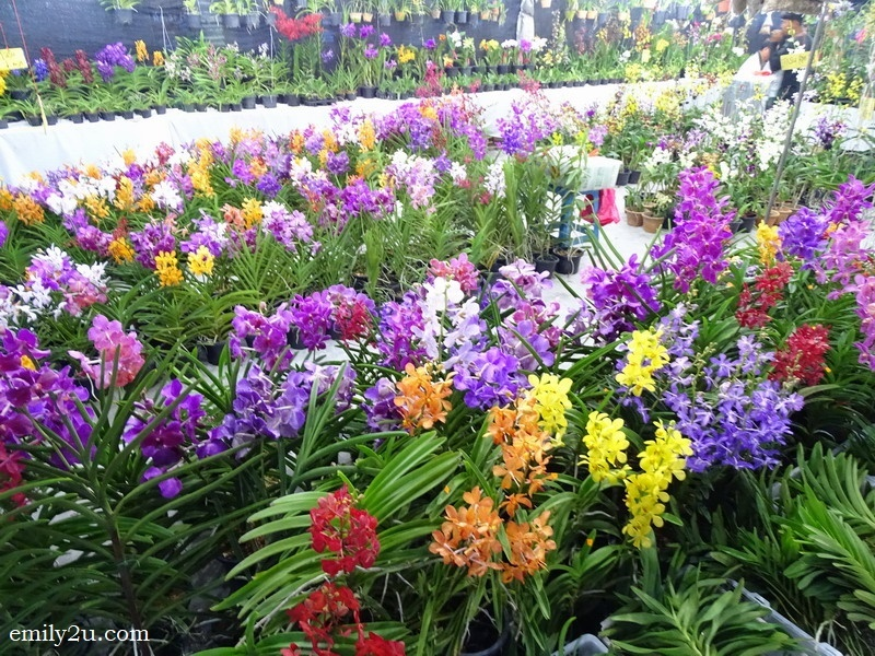2. a great variety of orchids