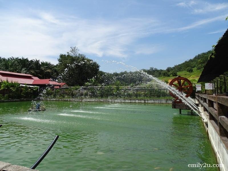 24. fish pond