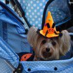ISPCA Halloween Dogathon 2017