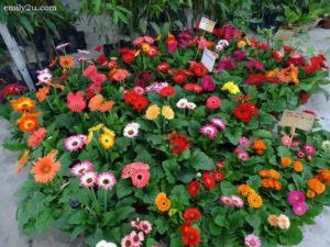 3 Pesta Orkid dan Flora