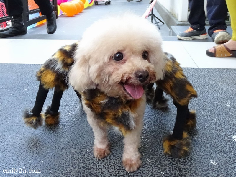 4. Kitty, the spider dog