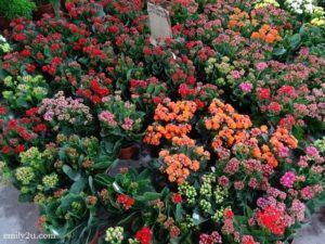 5 Pesta Orkid dan Flora