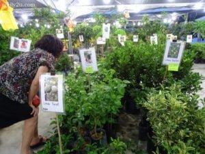 6 Pesta Orkid dan Flora