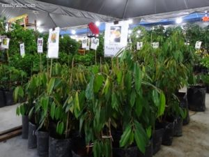 7 Pesta Orkid dan Flora