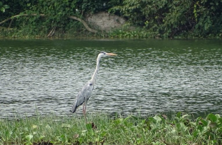 Kinta Nature Park (Taman Alam Kinta), Batu Gajah, Perak