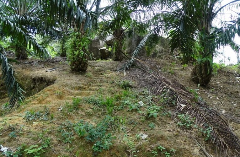 Kota Persembunyian Raja Bersiong in Selama (Perak)