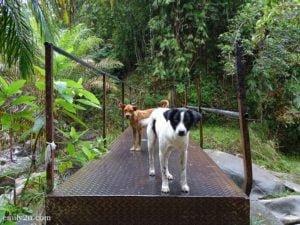2 Gepai Falls Bidor