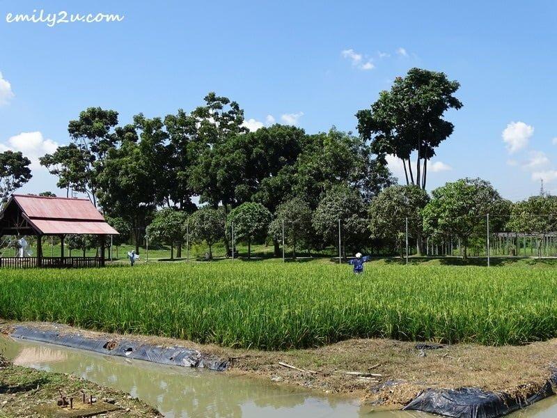 19. Rice Info Centre