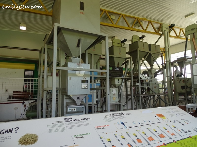 20. processing of rice