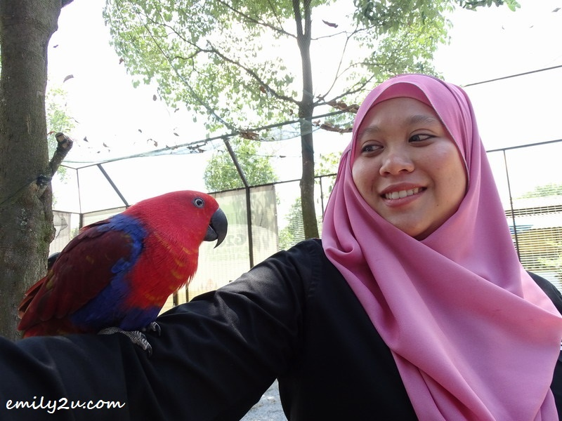 26. photo shooting with parrot