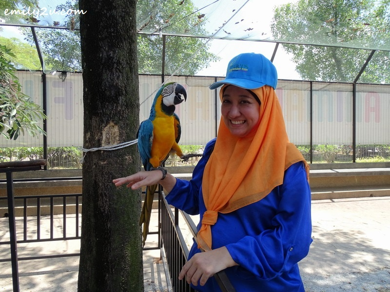 27. Pn. Rita Abdul Rahim meets a parrot wearing the same colours