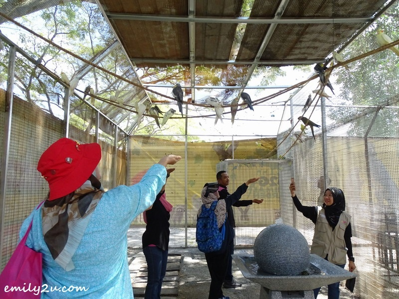 29. free-flight walk-in aviary
