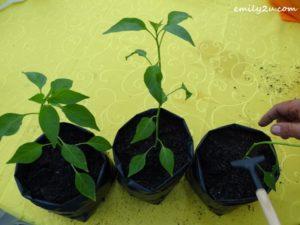 3 Putrajaya Urban Farming