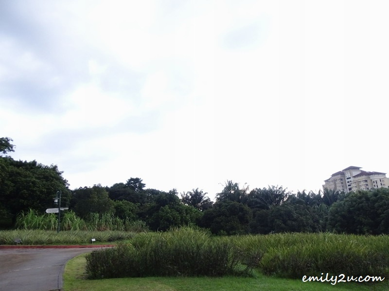 3. the greens of Taman Warisan Pertanian Putrajaya