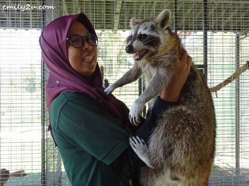 30. angry raccoon