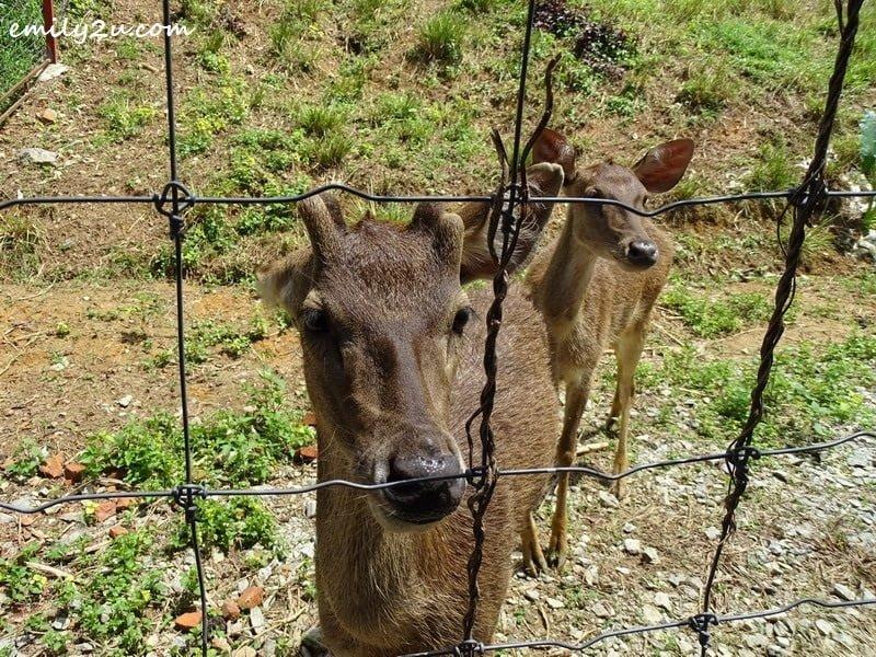 32. deer