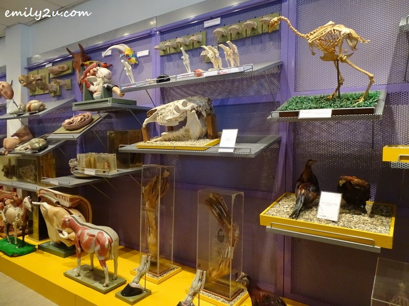 5. some of the exhibits